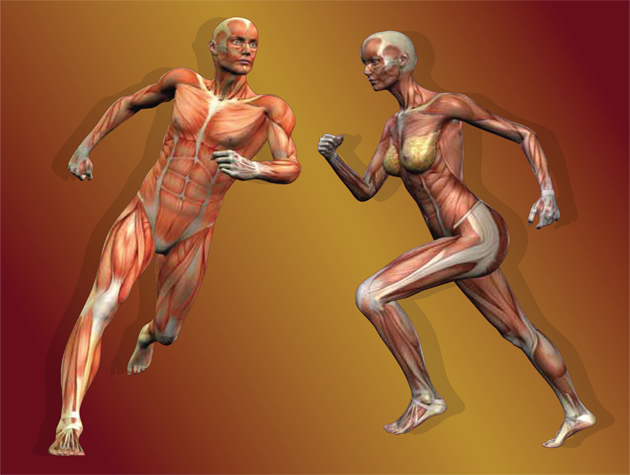 <label>Body Scan Breaks Down Injuries</label><br /> Body Scan is for educational purposes only. It is designed specificially to assist you in recognizing symptoms and identify potential injuries. It is not intended to replace medical and clinical evaluation and/or treatment. <a class='body_scan_btn' href='http://mvpboxing.com/body-scan'><img border='0' src='assets/images/body_scan_btn_n.png' align='middle' /></a>